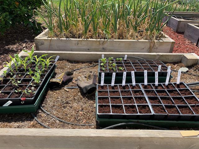 Starter pots for new plants